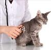 Ветеринарные клиники в Междуреченске